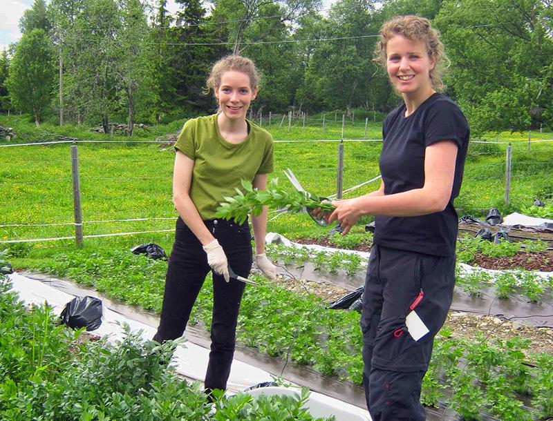 Eleonie Pijl og Torunn Spånberg høster i urtehagen